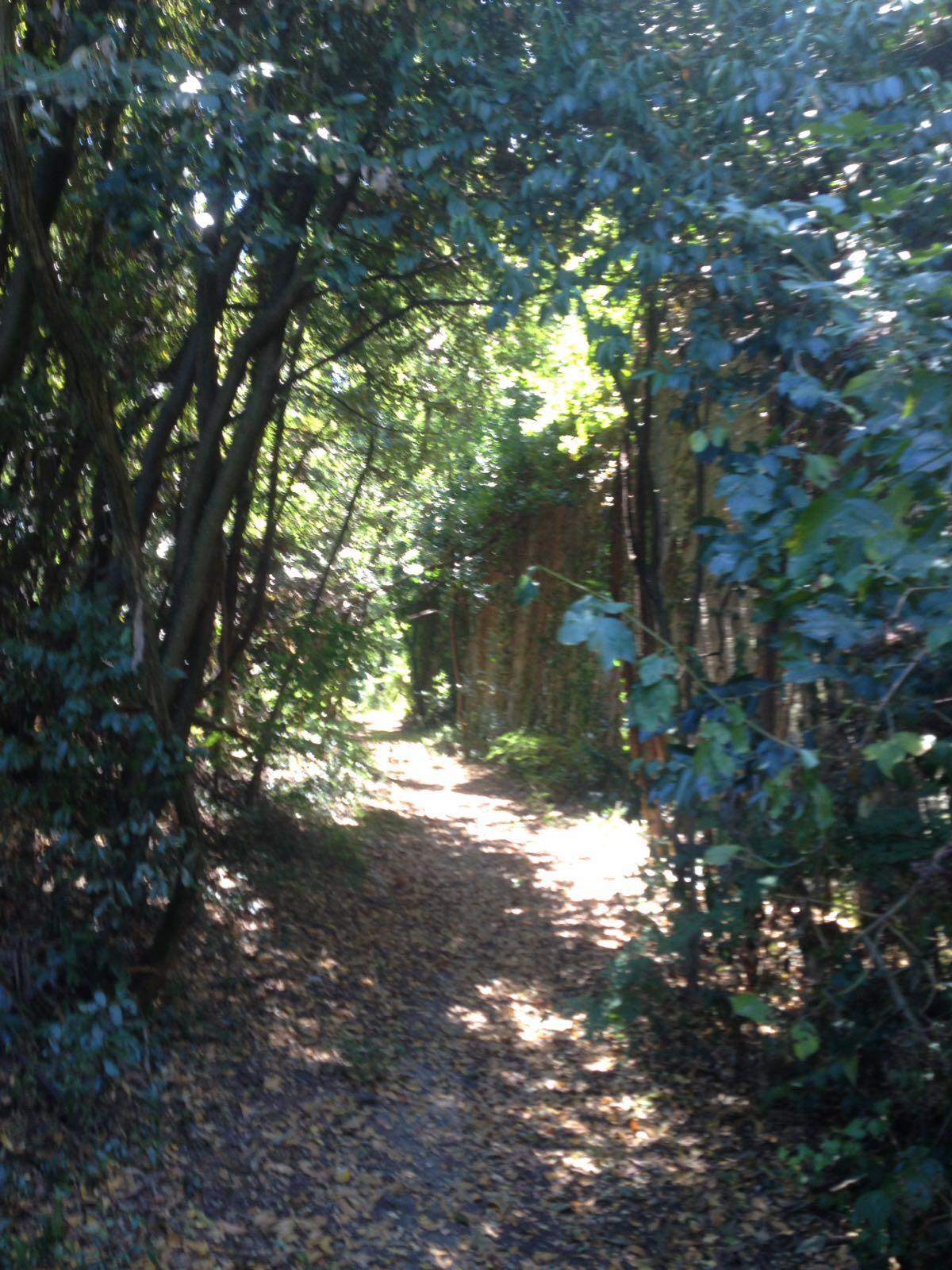 mura-nel-bosco